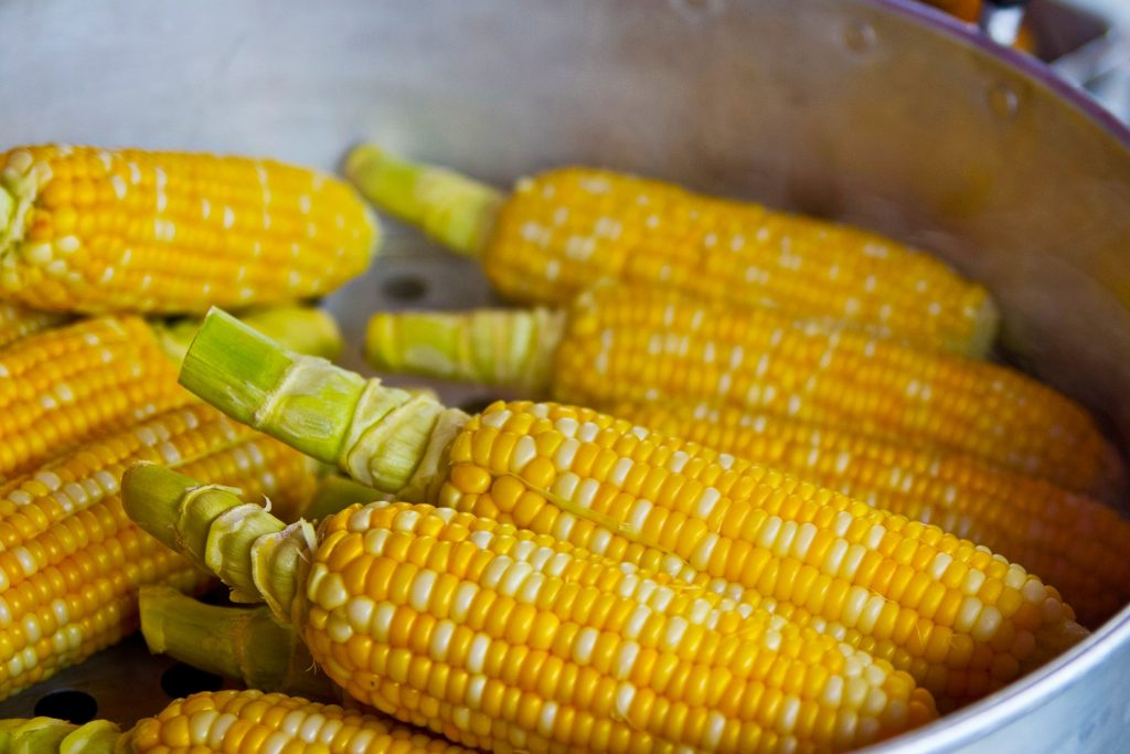 Corn on the cob cooking in a large pot.
