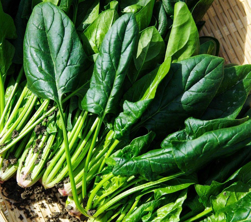 Basket of freshly harvested spinach.