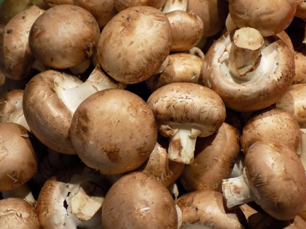 Pile of brown mushrooms.