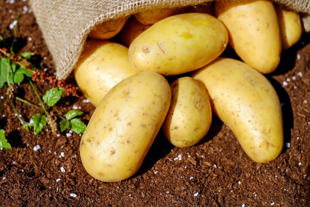 Potatoes fallen out of a sack on the ground.