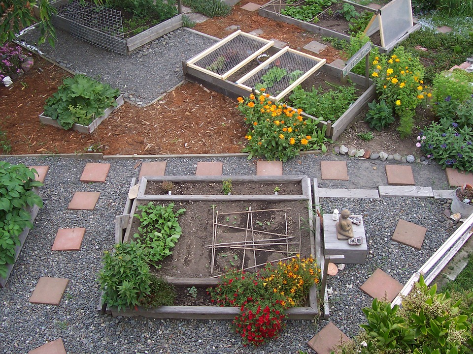 Community garden with a variety of garden beds, plants and flowers growing.