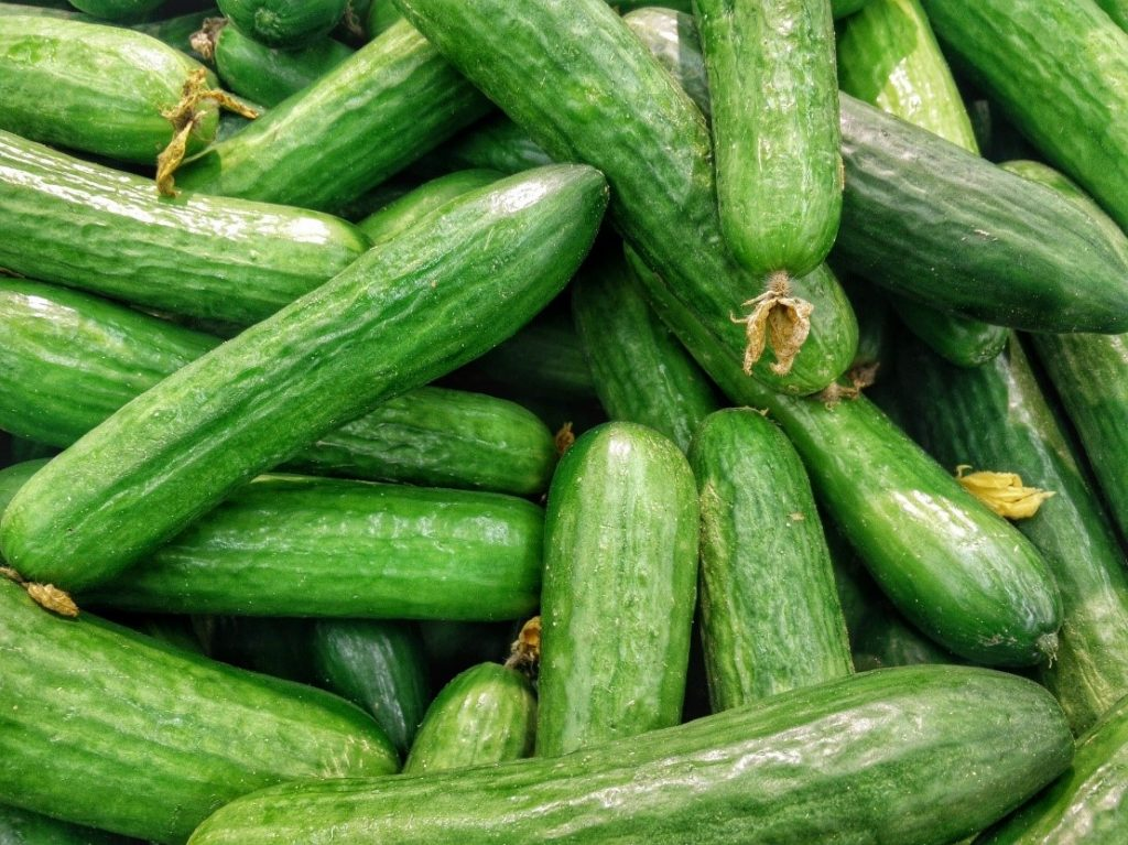 Fresh raw cucumbers in a pile.