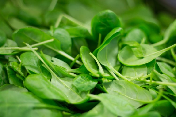 Fresh small leaf spinach in a pile.
