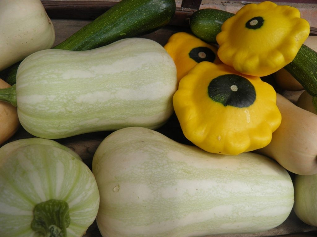Variety of squash in a pile.