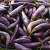 Eggplant in a pile outdoors.