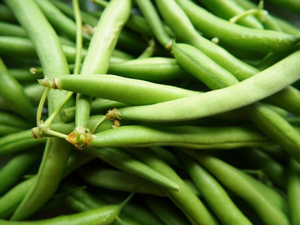 Fresh green beans in a pile.