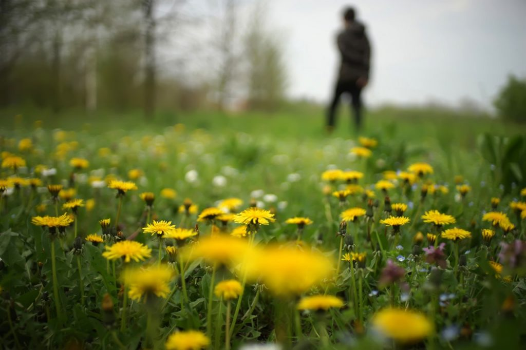 Wild flowers grow in front view of picture, with man walking in background of picture.