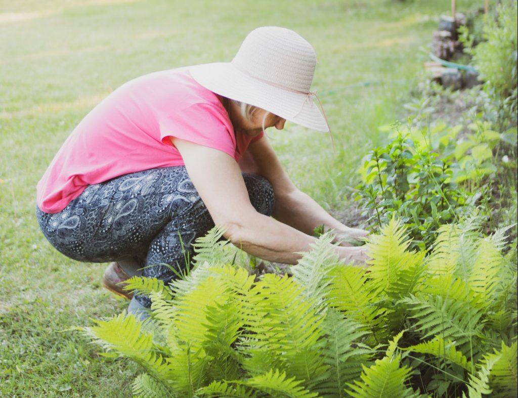 Older woman gardening in small garden, kneeling down.